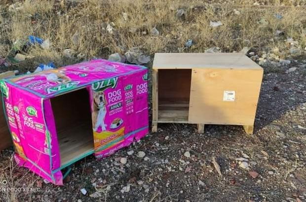 Bozuk para kasaları sokaktaki canlara yuva olmaya devam ediyor Çifteler ve Mihalıççık'a gönderilen kasalar hayvanlara yuva olacak