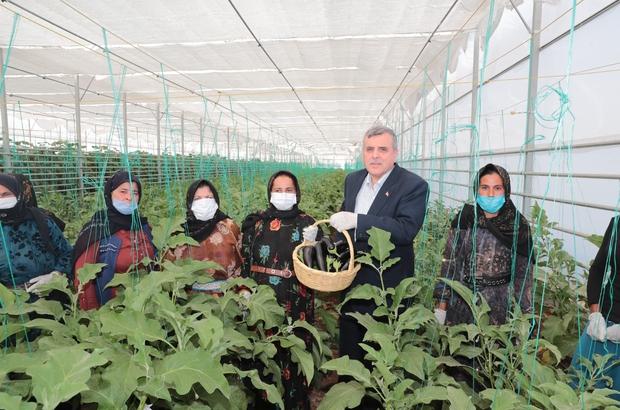 Şanlıurfa'da seracılık projesinde ilk hasat