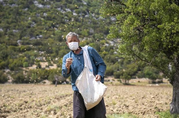 Gülnar'daki üreticiye nohut desteği Mersin Büyükşehir Belediyesince hayata geçirilen 'Yerel nohut çeşitlerinin yerinde korunması ve pazarlanması projesi' kapsamında, Gülnar ilçesindeki 34 üreticiye 2 bin 40 kilo tohum desteği sağlandı