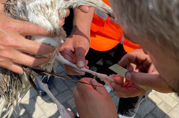 Deniz salyasında ağa takılan martı kurtarıldı