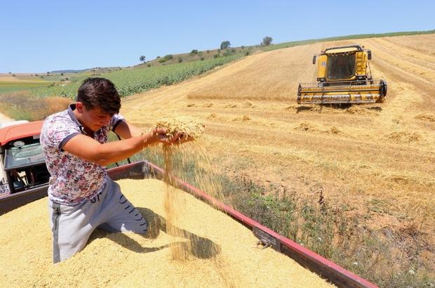 Çiftçi umudunu buğdaya bağladı Buğday üreticisi umutlu