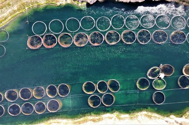Türkiye'nin üretim merkezi Elazığ'dan dünyaya Türk Somonu 3 tarafı baraj ve göllerle çevrili olması nedeniyle yarım ada konumunda bulunan Elazığ, alabalık üretiminde ilk sırada yer aldı Amerika, Rusya, Japonya, Kanada başta olmak üzere dünya pazarında söz sahibi oldu Geçtiğimiz yıl 3 bin ton Türk Somonu üretilerek ihracatı yapılırken, bu yıl AB'den sonra Japonya ve ABD'ye ye de gönderilmeye başlandı