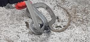 Isparta'da yılan operasyonu