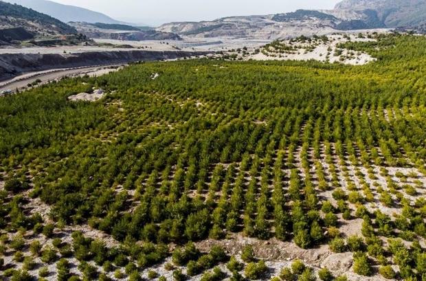 Manisa'da 'Sıfır Atık Projesi' 6 bin ağacın kesilmesini önledi