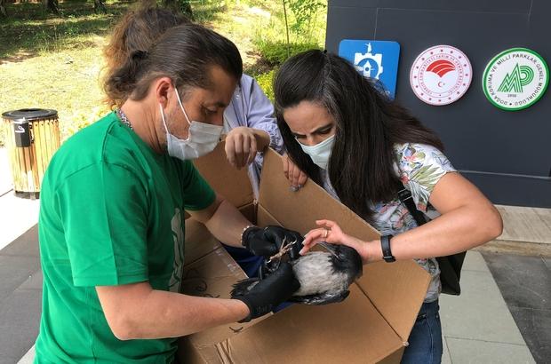 Yaralı kargaya ilk müdahaleyi yapıp elleriyle beslediler 112 ekipleri önce vakaya sonra yaralı karganın yardımına koştu