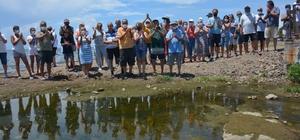 Dikili'de mandıra kirliliği isyanı Dikili'de mandıra atıklarının dere aracılığıyla denize karıştığı iddiası
