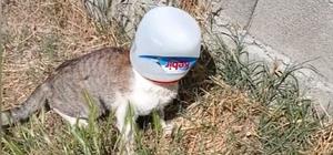 Kafasına kova sıkışan kediyi kurtarmak için seferber oldular