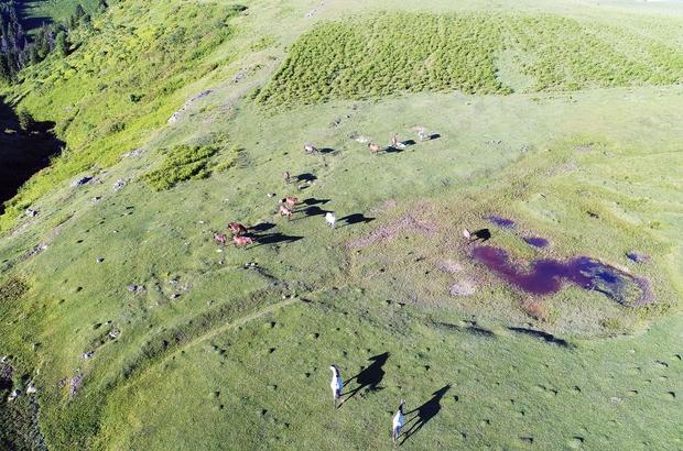 Yılkı atları havadan görüntülendi Huzur veren görüntüler