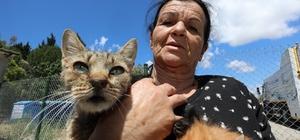 Sokak hayvanlarına adanmış bir ömür 71 yaşındaki kadın, sokak hayvanlarının bakımı için her gün iki minibüs değiştiriyor