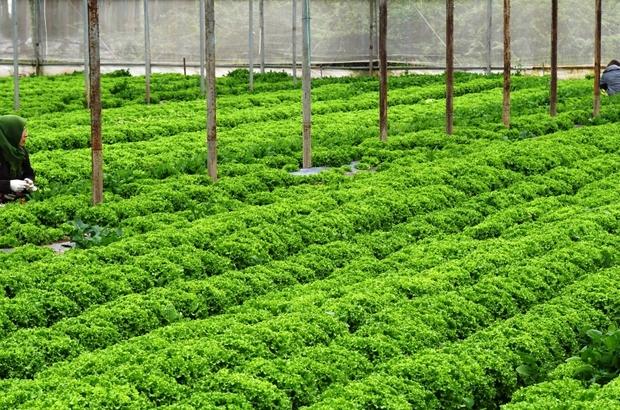 Türkiye'nin 3'ncü tarıma dayalı OSB'si Bafra'ya kuruluyor