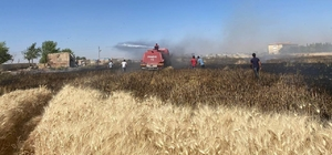 Buğdayın yandığını gören mahalleli tarlaya koştu Şanlıurfa'da buğday tarlasında yangın çıktı Buğday tarlasında çıkan yangın itfaiye ve mahalleli tarafından söndürüldü