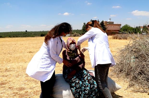 (Özel) Tarlada aşı Gaziantep İl Sağlık Müdürlüğü aşı timleri önce ikna ediyor sonra aşılıyor Sosyal medyadaki paylaşımlardan korkan vatandaşları aşı timleri ikna ediyor
