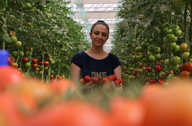 Topraksız tarım hem kadınlara iş kapısı oldu, hem de yılın 10 ayında üretim yapılmaya başlandı Elazığ'da 30 dönümlük alanda kurulan serada topraksız tarım ile domates üretimi yapılırken, çoğunluğu kadın 25 kişinin istihdamıyla ailelere ekonomik destek sağlanıyor Yılın 10 ayı üretim yapılan topraksız tarım ile her sene 900 ton domates üretilerek, hem Elazığ'ın, hem de komşu illerin ihtiyaçları büyük oranda karşılanıyor