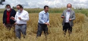 Tarım ve Orman İl Müdürü Öcal'dan dolunun vurduğu ekili alanlarda inceleme