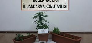 Bodrum'da kenevir operasyonu