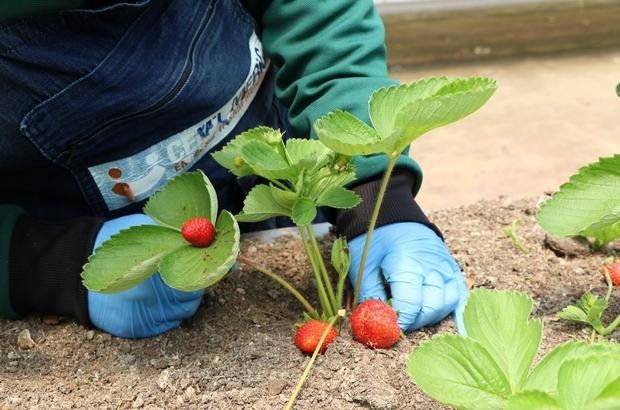 Özel öğrencilere tarımsal rehabilitasyon desteği