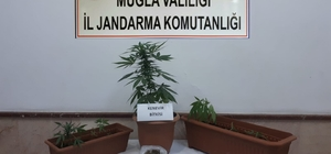 Bodrum'da uyuşturucu operasyonu: 1 gözaltı