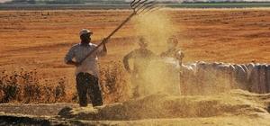 Kahramanmaraş'ta hasat zamanı