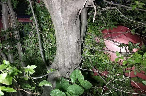 Şarampole uçan 2 araçtaki sürücülerin hayatlarını uçuruma 2 metre kala ağaç kurtardı