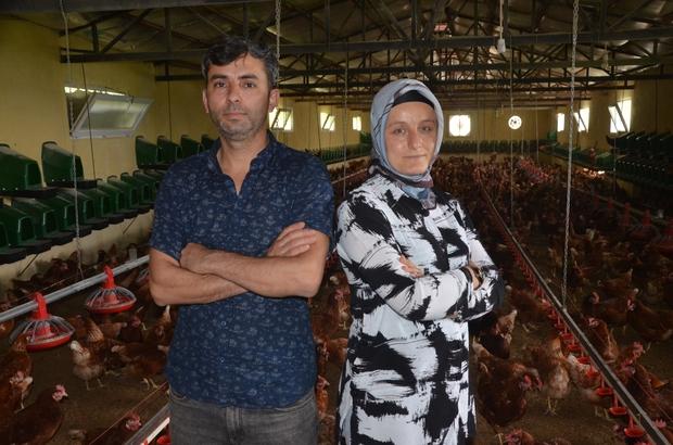 Organik yumurta üretimi yapan karı-koca, ihracata başladı Ordu'da organik yumurta üretimi yapan çift, ürettikleri yumurtaları Dubai ve Almanya'ya ihraç etmeye başladı
