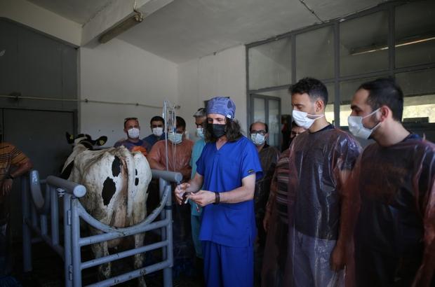 (Özel) Şampiyonların sayısı bu teknoloji ile artacak Sığırlarda embriyo transferi kursu büyük ilgi gördü Yüksek verimli hayvanların sayıları embriyo transferi ile artırılacak