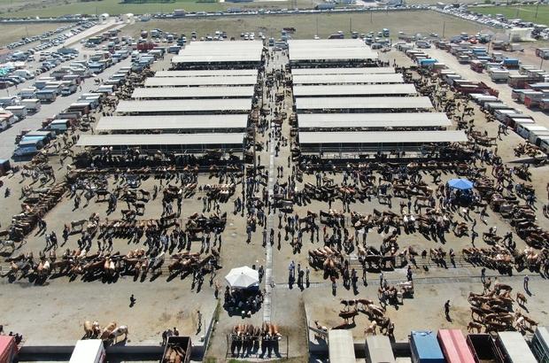 İç Anadolu'nun en büyük hayvan pazarında kurban Bayramı yoğunluğu Sivas'ın Şarkışla ilçesinde bulunan Türkiye'nin en büyük hayvan pazarında Kurban Bayramı yoğunluğu yaşanıyor