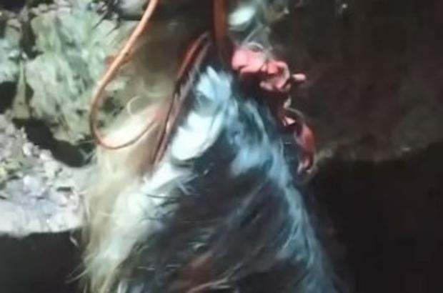 Mağaraya düşen keçi için zorlu kurtarma operasyonu Metrelerce yükseklikten mağaraya keçi düştü, ekipler seferber oldu