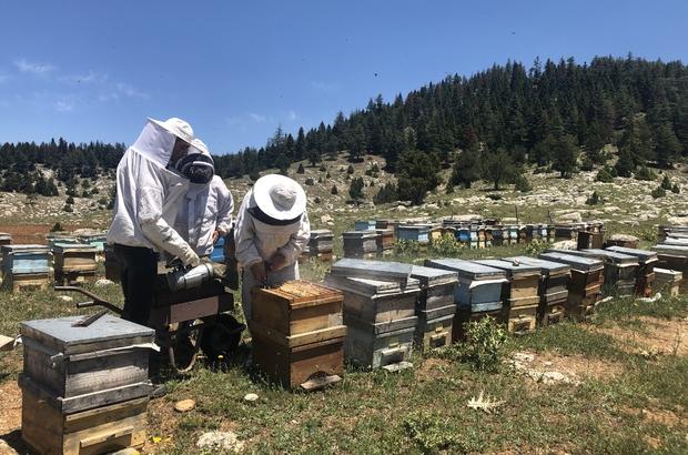 """İklim değişikliği bal üretimini düşürecek Hatay Mustafa Kemal Üniversitesi Öğretim Üyesi Zootekni Doç. Dr. Aziz Gül, küresel ısınma ile yaşanan iklim değişikliğinden arıların olumsuz etkilendiğini belirtti Doç. Dr. Aziz Gül: """"Polen olmadığı yerlerde arıcılarımız polen alsınlar ya da hasat yaptıktan hemen sonra polen kaynaklarına arılarını taşısınlar"""""""