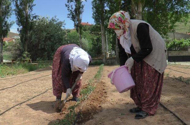 """(ÖZEL) Çiftçi kadınlar yeni projeleri ile pandemide de üretmeye devam ediyor KAÇEM Başkan Yardımcısı Şükran Başdoğan: """"Biz kadın çiftçiler olarak hiç durmadan tarlada çalışmaya devam ettik"""" """"İnsanların güvenli ve organik ürünlere ulaşmaları için çalışmalarımıza devam edeceğiz"""""""
