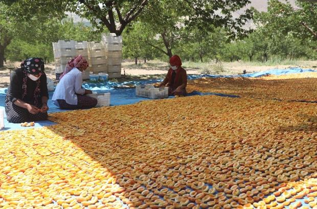Sivas kayısı üretiminde 10'uncu sırada Türkiye İstatistik Kurumu'nun (TÜİK) illere göre Türkiye'de meyve, içecek ve baharat bitkileri üretimine ilişkin verilerinden derlenen bilgilere göre Sivas'ta  2020 yılında 7 bin 672 ton kayısı üretildi. Sivas bu üretim miktarıyla Türkiye'de en fazla kayısının üretildiği 10'uncu il olarak kayıtlara geçti.
