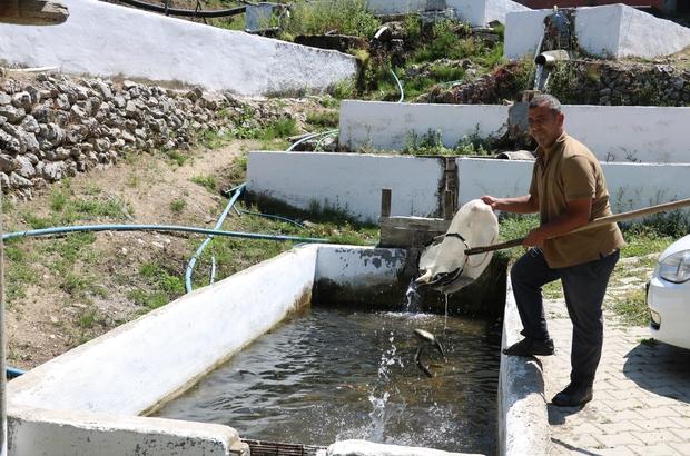 Fabrika işçisiydi kendi balık üretim tesisini kurdu Karadeniz'i andıran köyde balık üretim tesisi kurdu, şimdi yıllık 5 ton alabalık üretiyor