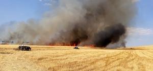 15 dönüm arazide ekili arpa kül oldu