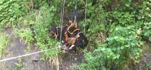 Trabzon'da mahsur kalan inekleri kurtarma operasyonu