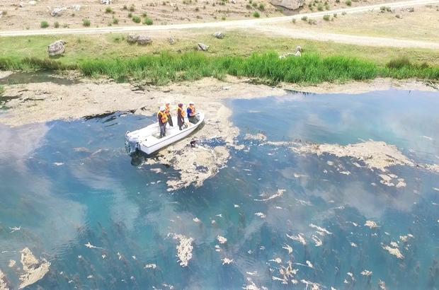 Sakaryabaşı'nda kontrol ve denetimler Drone destekli denetimlerde sahipsiz 100 metre ağ, 7 adet pinter ve ekolojik açıdan 40 kilo tilapia balığı ele geçirildi Ağların içinde bulunan canlı endemik balık türleri tekrar yaşam alanlarına bırakıldı
