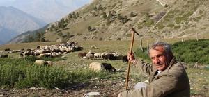 Çoban üretim için yol istedi 45 yıldır yayla yolunun yapılmasını bekliyor