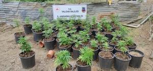 Yalova'da ev ve bahçede yetiştirilen 2 bin 767 kök kenevir ele geçirildi