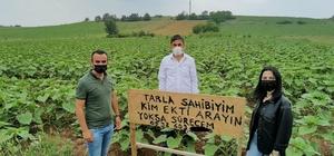 Kendisinden habersiz tarlasına ayçiçeği ekilen çiftçi bakın ne yaptı