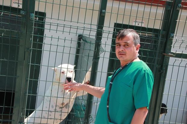 Bu köpekleri beslemenin cezası 11 bin TL Barınağı ziyaret edenler en çok bu köpeklere ilgi gösteriyor