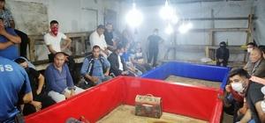 Horoz dövüştüren 23 kişiye 79 bin lira ceza kesildi
