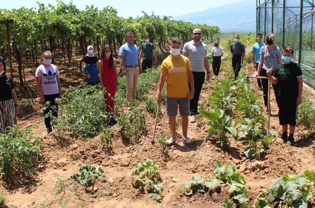 Okul bahçesinde sebze yetiştirip okula gelir sağlayacaklar Sebzelerini okul bahçesinde yetiştiriyorlar Manisa'nın Alaşehir ilçesinde okul bahçesinde kendi sebzelerini yetiştiren öğrenciler şimdi de organik tavuk yumurtası projesini başlatarak okulda gezen tavuk yetiştirecekler