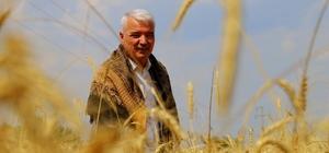 Saruhanlı Belediyesi ihtiyaç sahipleri için buğday hasadı yaptı Saruhanlı Belediyesinin kendi 25 dekarlık arazisine ekilen buğdaylar un haline getirilip 25 kilogramlık paketler halinde ihtiyaç sahibi ailelere ulaştırılacak