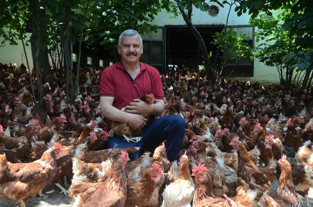 Ek gelir getirsin diye başladı, aylık yaklaşık 30 bin organik yumurta üretiyor