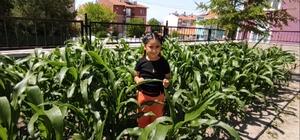 (ÖZEL) İlkokul öğrencileri yerli tohumla 16 çeşit sebze üretiyor 7 ton sebze üretimi bekleniyor Öğrenciler çapa ve ot temizliği yapıyor