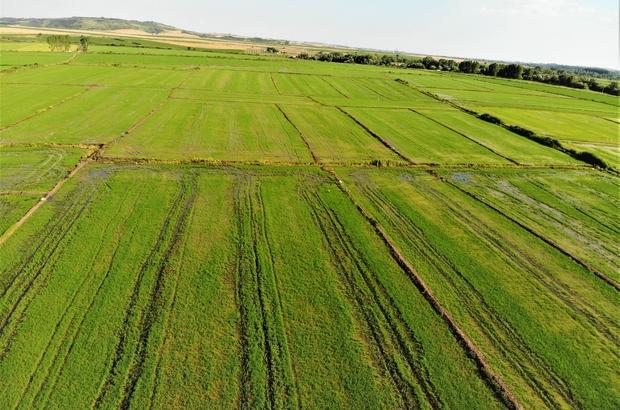 Edirne'de yağışlar çiftçinin yüzünü güldürdü