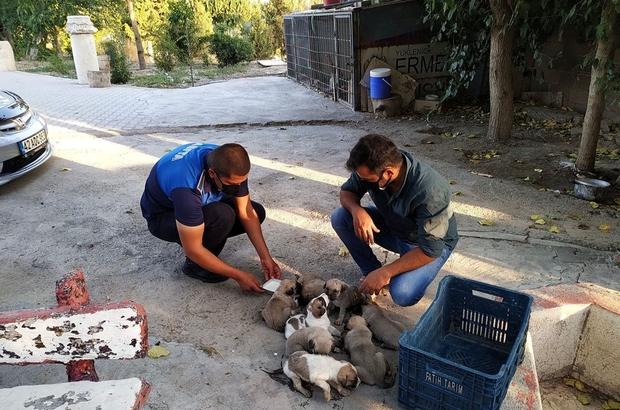 Çalılıklar arasında mahsur kalan yavru köpekler kurtarıldı