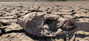 Van'daki göletlerde su sevisi kritik noktanın altına düştü Kısmen kuruyan göllerde yaşayan canlılar yok oluyor Tarım ve Orman Müdürlüğü ekipleri göllerde yaşayan canlıların ölmemesi için harekete geçti