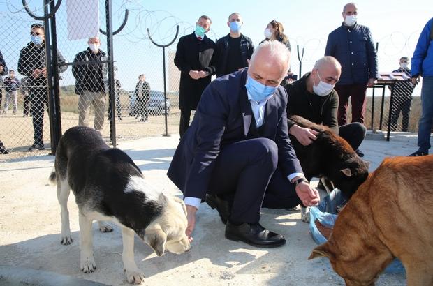 Başkan Gültak'tan sokak hayvanları için destek çağrısı
