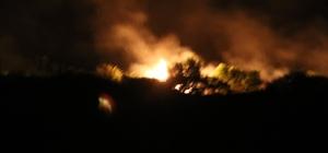 Meriç Nehri'ndeki adada çıkan yangında ağaçlar zarar gördü