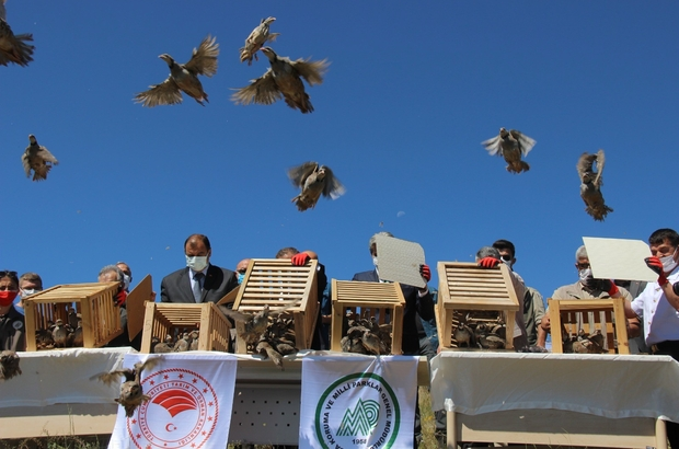 Yozgat'ta üretilen 16 bin 800 keklik doğaya salınıyor