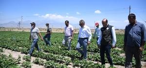 """Yerli fasulye tohumu çiftçilerin yüzünü güldürdü İl Tarım ve Orman Müdürü Mustafa Şahin: """"Kayseri, Türkiye'nin en önemli fasulye üretim alanı olacak"""""""